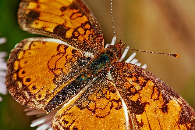 butterfly-564564_640